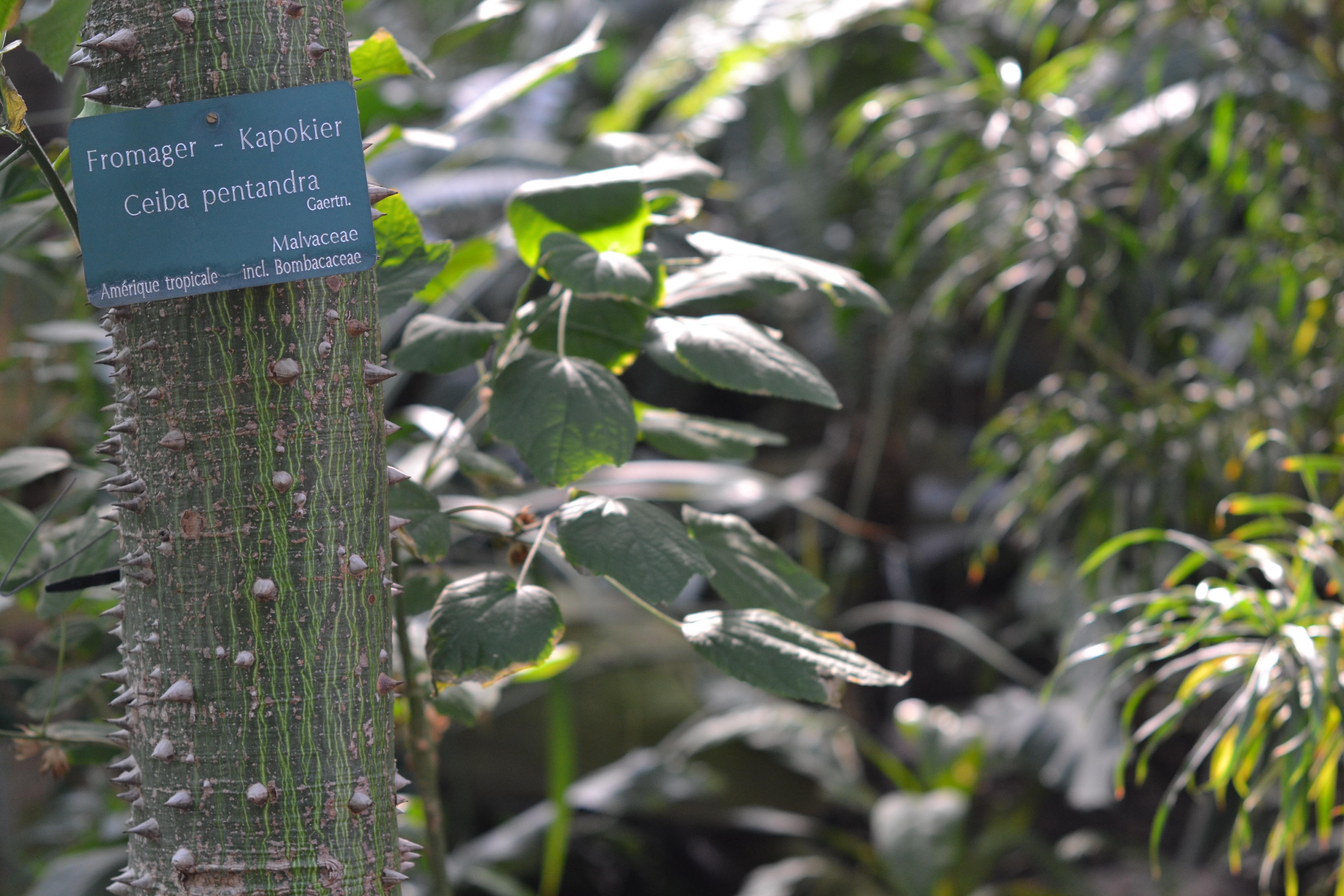 Les grandes serres du jardin des plantes un petit bout de - Serres jardin des plantes ...