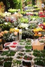 Amsterdam - marché au fleurs - tulipes