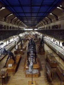 Galerie de paléonthologie Paris