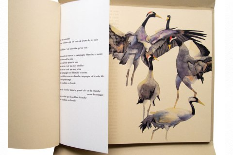 Illustration de Bel oiseau long courrier